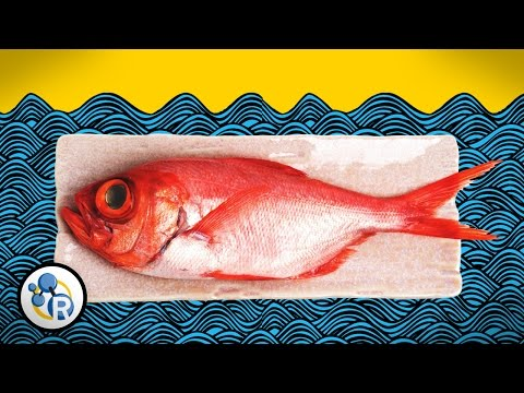 Three Ways To Make Fish Smell Less 'Fishy' With Science