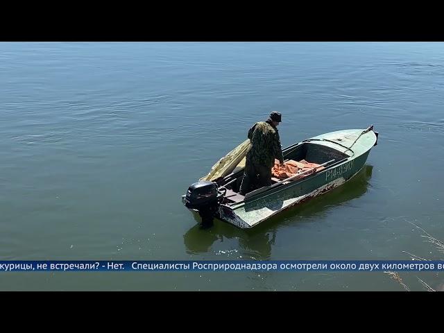 В Ангаре плавают куриные потроха