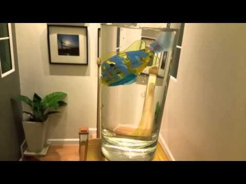 La pesca su un crucian di astuzia di video