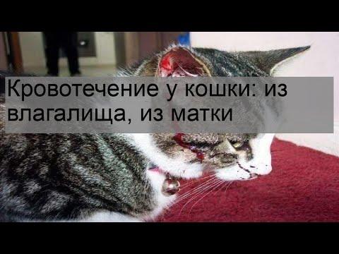 Кровотечение у кошки: из влагалища, из матки