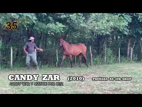 Lote CANDY ZAR
