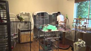 Volunteering at Ginger's Parrots Rescue