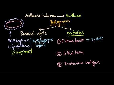 bacterii lactozo pozitive tapeworm forte