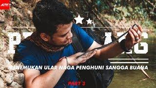 Download Video Sang Petualang - Menemukan Ular Naga Penghuni Sangga Buana [PART AKHIR] MP3 3GP MP4