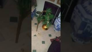 Breaking News U.S.A. is so cheap Charlie Brown Tree made in CHINA  two sticks fake branch WTF?