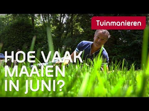 Hoe vaak moet je je gazon maaien in juni? Grastips