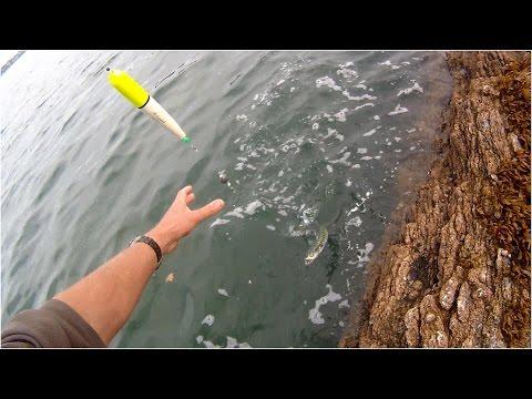 Makrelfiskeri med flåd på den engelske kyst