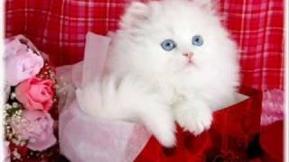 قطط رووووعة