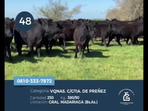 Lote Vaquillonas CGP - Gral Madariaga