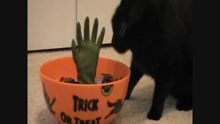 Pumpkin Cat & The Halloween Candy Bowl