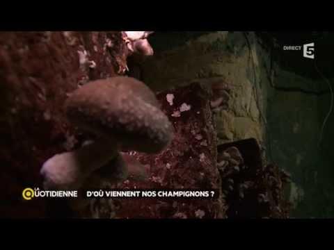 Le cèpe le parasite ou non