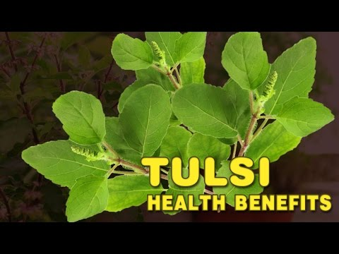 Video Health benefits of Tulsi | Holi Basil Benefits | Spiritual Videos