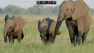 INOpets.com Anything for Pets Parents & Their Pets Elephant: King Of The Kalahari