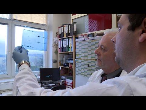 Kořen slunečnice s prostatitidy