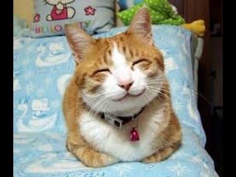 Фото Топ 10 самых смешных котов