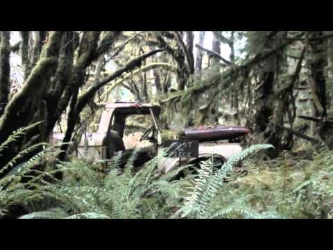 Nature Tour - Lake Quinault
