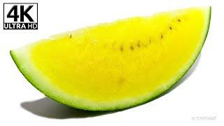 Watermelon 4K Timelapse - Video Youtube
