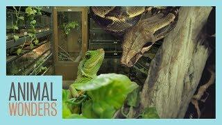 Reptile Room Renovation!