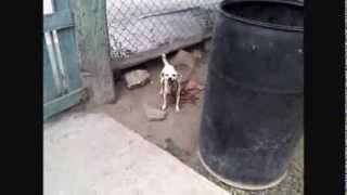 Bonbom pide agua/Perro que habla