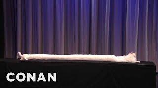The World's ACTUAL Longest Cat - Conan on TBS