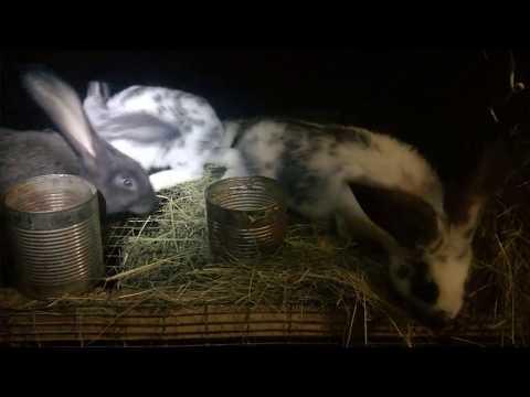 Взвесили крольчат в 2 месяца,результат помеси.