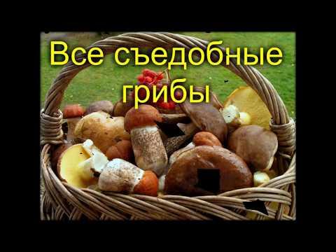 Все съедобные грибы