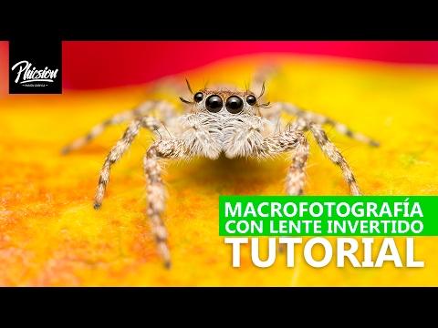 como hacer fotografía macro l macrofotografía con Anillo inversor