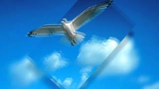 Cuccurucucu paloma - Franco Battiato
