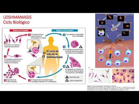 Vaccino papilloma virus bergamo