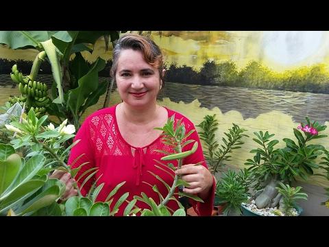 Plantar semente em filtro