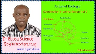 Coordination in animals (A  level), lesson 1 of 2