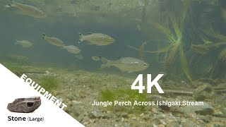 【Animal FPV】4K Jungle Perch across Ishigaki Stream 【アニマルFPV】