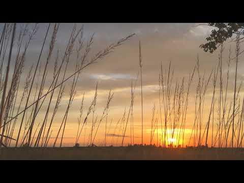 Sunset on the field. Закат на поле.