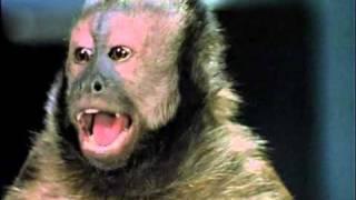 Monkey Shines Movie