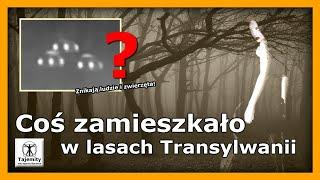 Coś zamieszkało w lasach Transylwanii