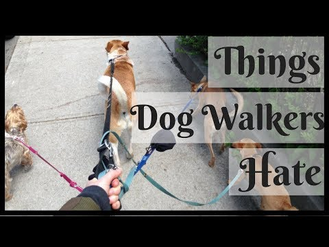 5 THINGS EVERY DOG WALKER HATES  | InRuffCompany.com