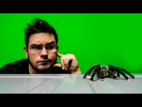 Zadzwoń phlebologist dom moskwa