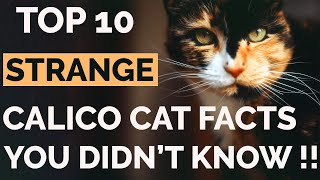 Top 10 Calico Cat Facts That Will Amaze You !!   Calico Cat Personality