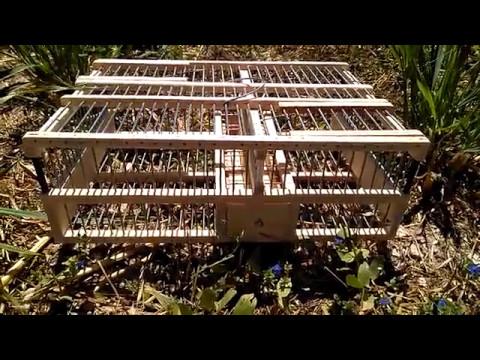Jaulon de transporte de pájaros