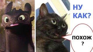 Ржачные приколы. Дракон Беззубик и котэ.