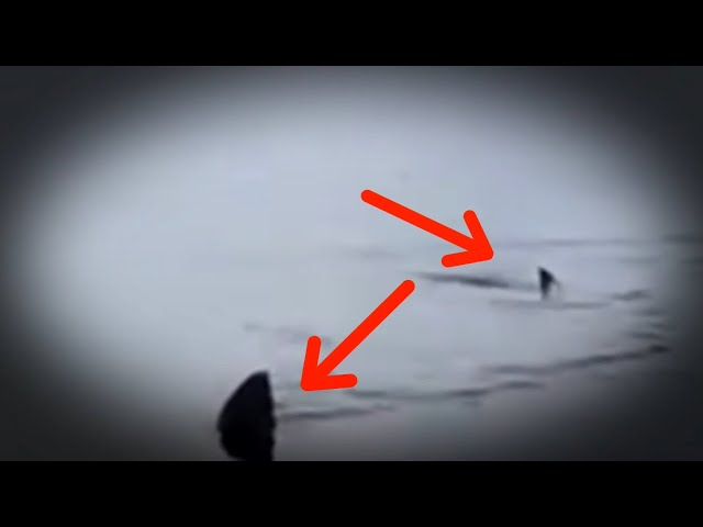 5 Megalodon Caught on Camera & Spotted In Real Life! #2