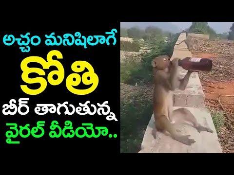 ఎత్తిన బీర్ బాటిల్ దించకుండా తాగిన కోతి | Monkey Drinking Beer | Viral Video | Top Telugu Media