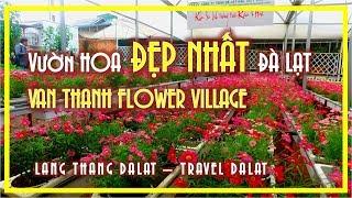 VƯỜN HOA ĐẸP NHẤT ĐÀ LẠT | VAN THANH FLOWER VILLAGE | TRAVEL DALAT