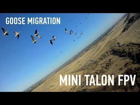 mini-talon-fpv--goose-migration--wildfire--estonia