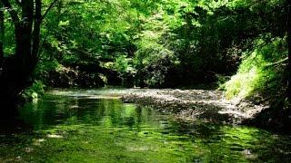 癒し森のせせらぎ、ヒグラシ、セミの鳴き声自然音2時間版