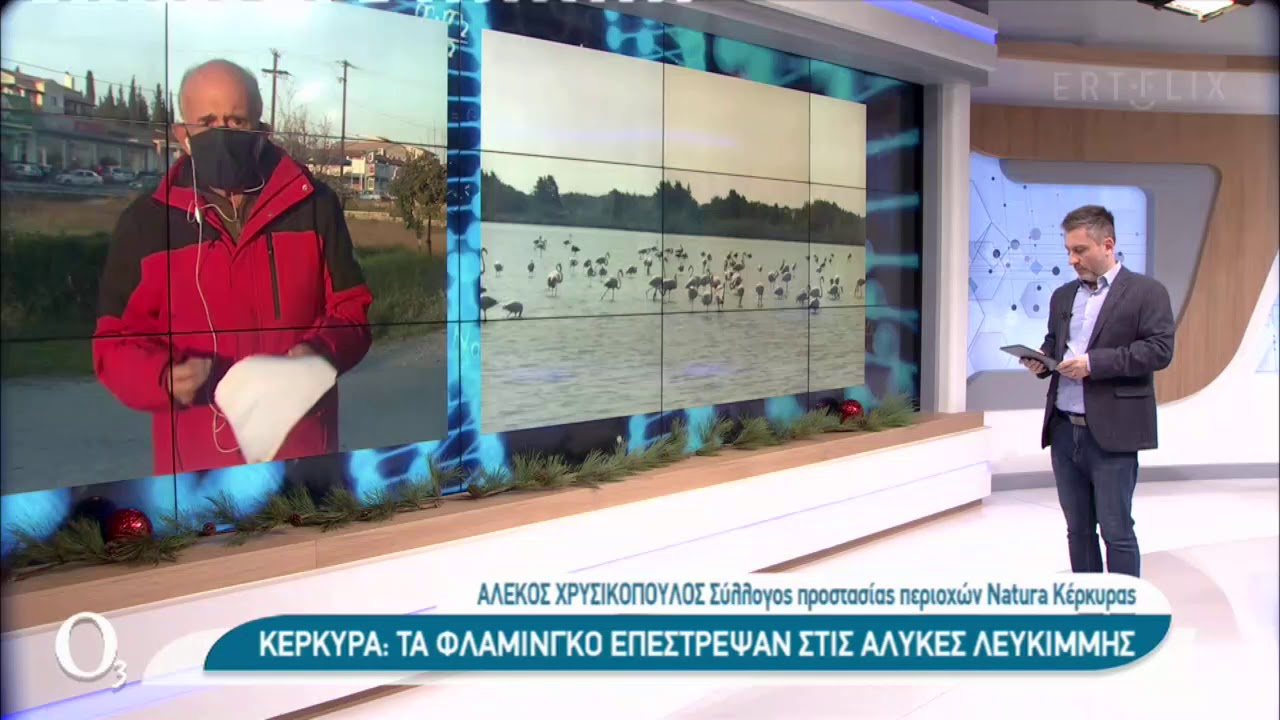 Τα φλαμίνγκο επέστρεψαν στις αλυκές Λευκίμης στην Κέρκυρα | 23/12/2020 | ΕΡΤ