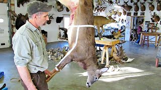 HOW TO CAPE A DEER FOR A SHOULDER MOUNT. GO FOR IT!!!