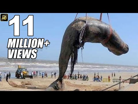 Worlds Biggest Blue Whale Fish At Juhu Beach Mumbai Mp3