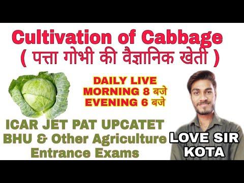 , title : 'Cultivation of Cabbage ( पत्ता गोभी की वैज्ञानिक खेती )