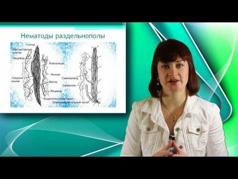 Таблетки от глистов паразитологов